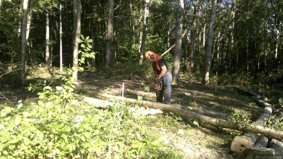 ehitusala puhastamine puudest, raadamine