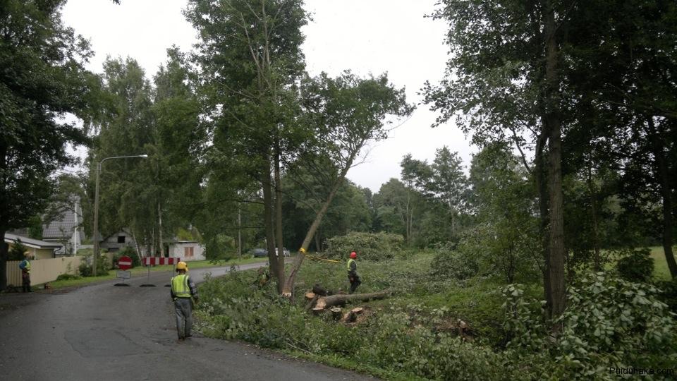 ohtlike-puude-langetamine-muuga-teel