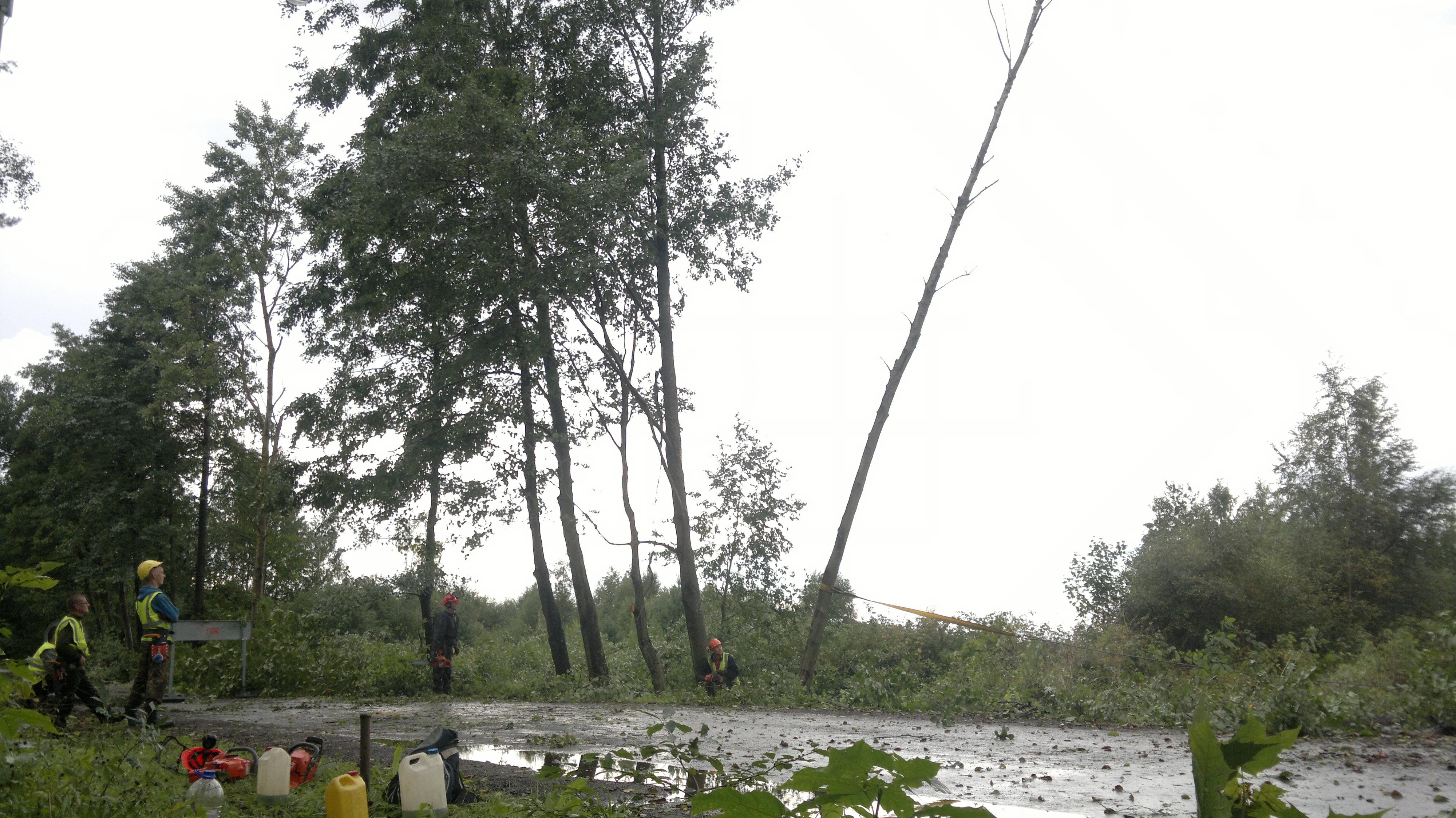ohtliku-puu-eemaldamine