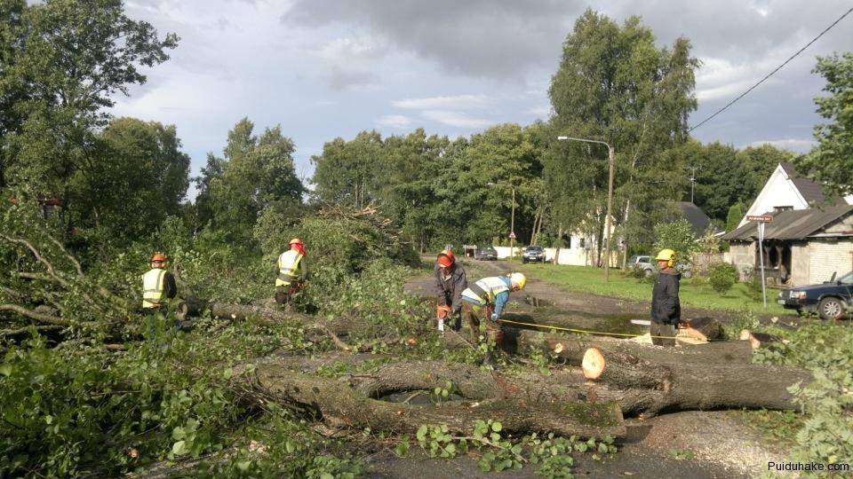 puude-laasimine, raadamine, raietööd