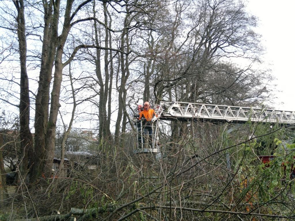 puude-langetamine, ohtlike puude langetamine