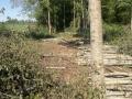 saemehed, küttepuude tootmine, raietööd