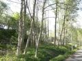 võsast puhastatud park